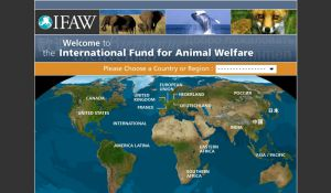 Site officiel : http://www.ifaw.org